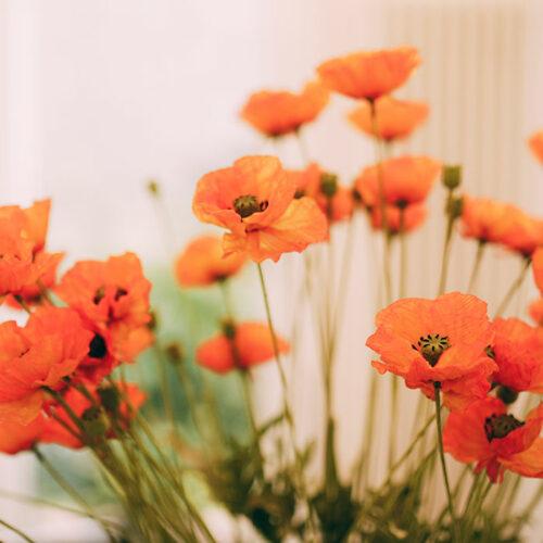 Blumen beim Zahnarzt in Berlin-Spandau.