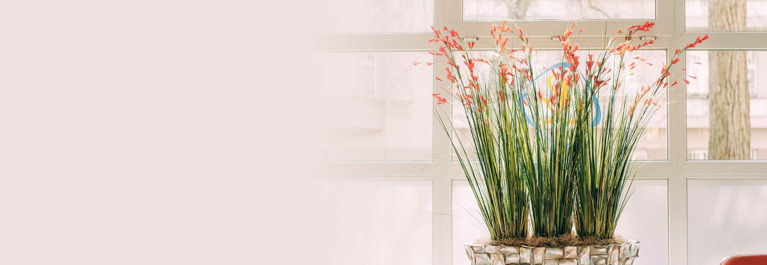 Blumen bei einem Hausbesuch, den Zahnarzt Dr. Kurth & Partner aus Berlin-Spandau durchführt.